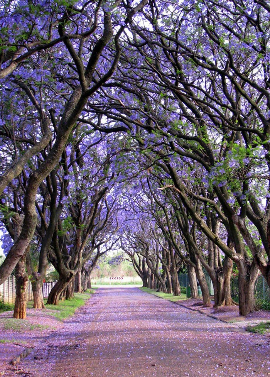 Cullinan, Αφρική