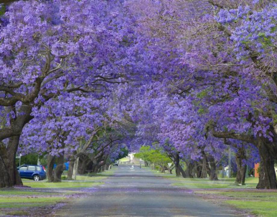 Grafton, Νέα Αυστραλία