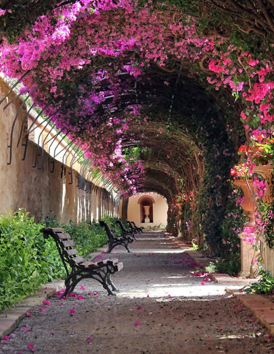 Vanelcia, Ισπανία
