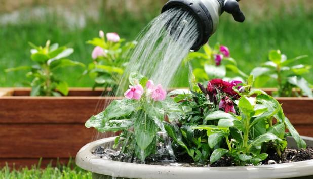 Δείτε πώς θα Διατηρήσετε τα Φυτά σας ενώ Λείπετε από το Σπίτι