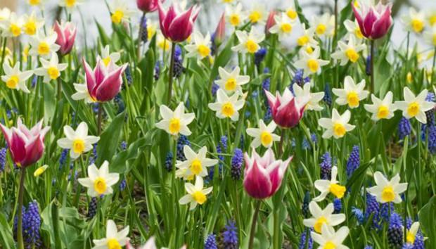 Βολβοί: Όλα όσα Πρέπει να Ξέρετε για να Διαπρέψουν στον Κήπο σας