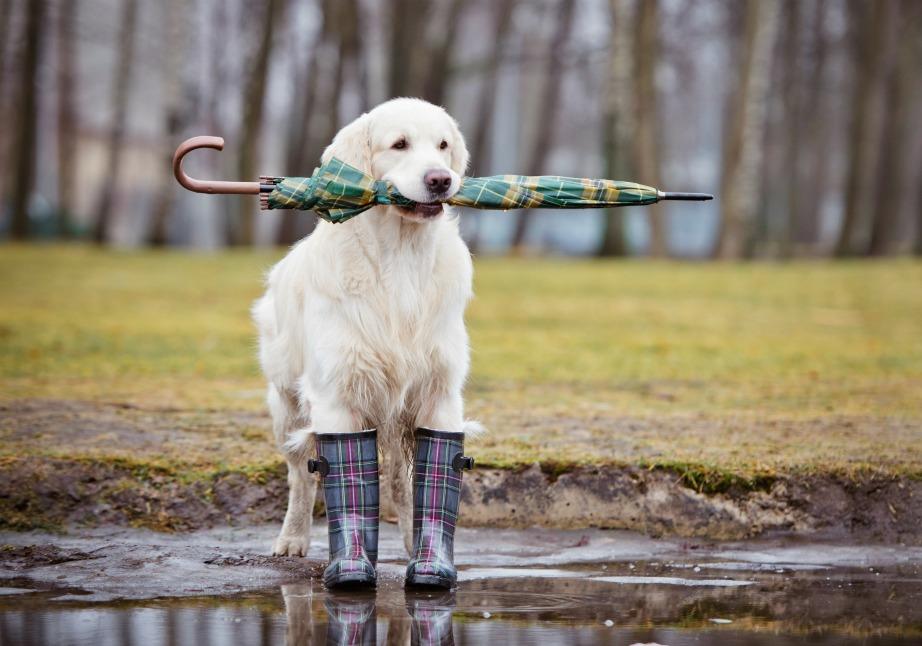 Η βροχή είναι μια ωραία ευκαιρία για να κάνετε πολλά πράγματα, που θέλατε εδώ και καιρό, μέσα στο σπίτι σας.