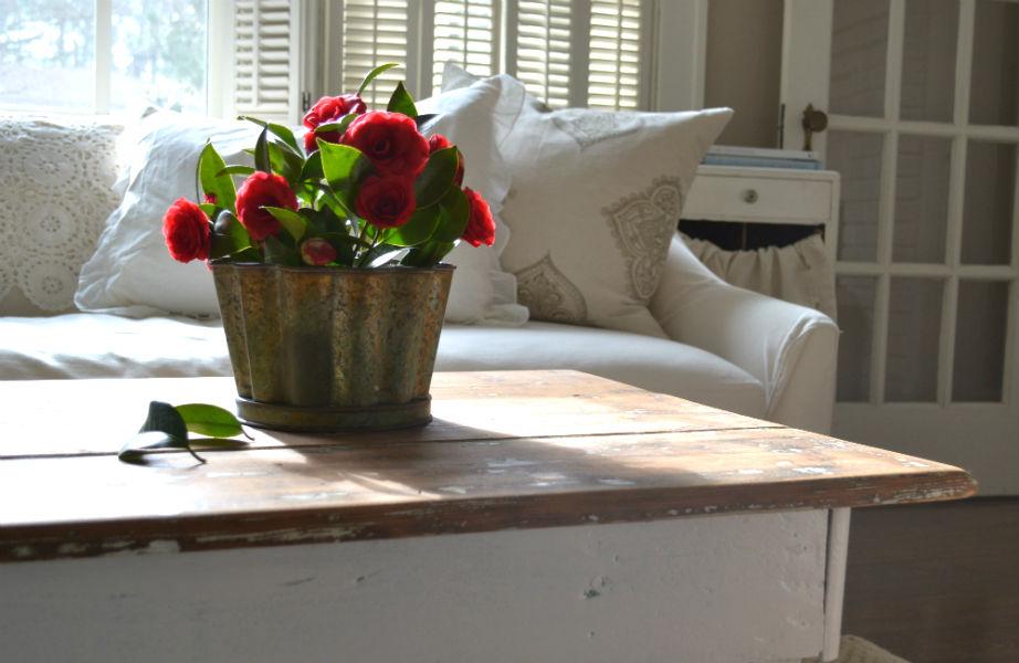Οι πανέμορφες καμέλιες ανθίζουν το χειμώνα (και) στο σπίτι σας!