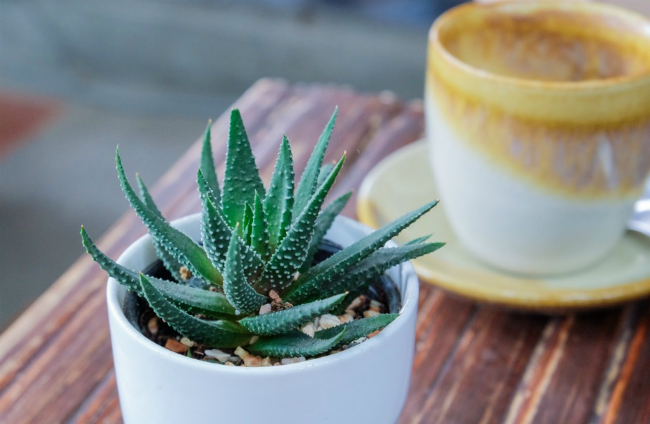 thehomeissue_aloe