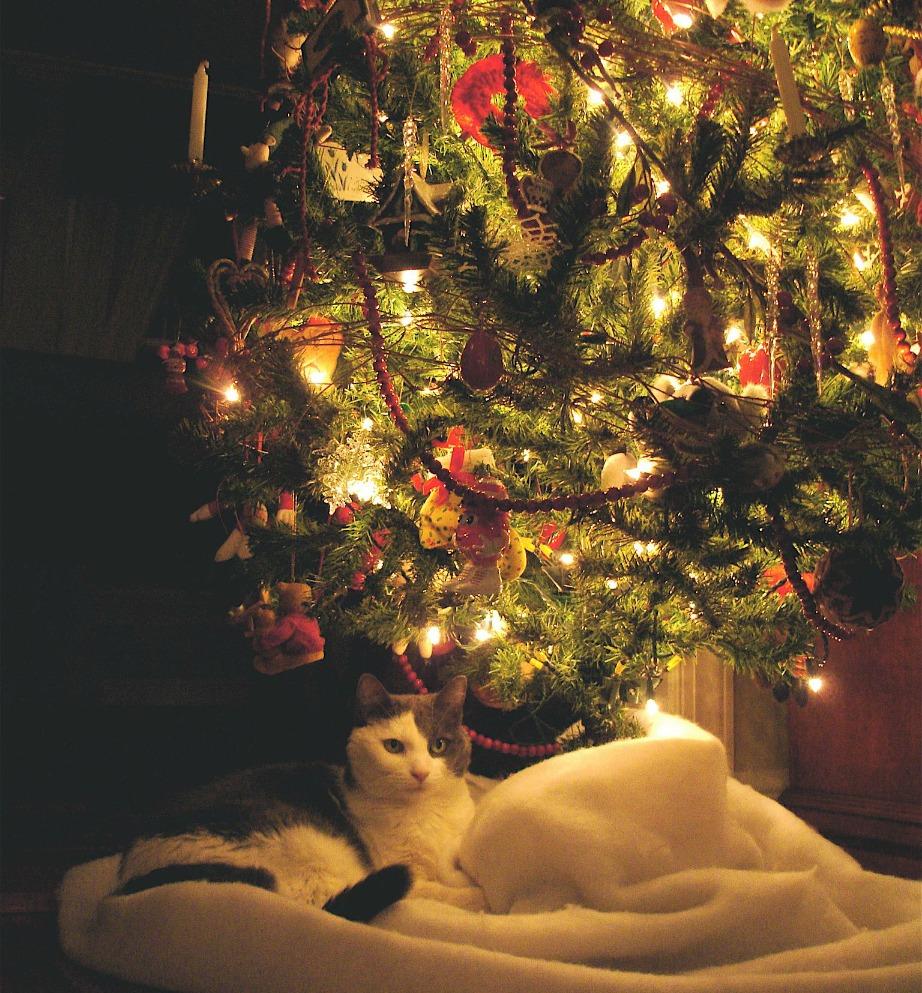 Βάλτε το δέντρο σας σε σημείο που δεν είναι κοντά σε τζάκι ή συσκευές θέρμανσης.