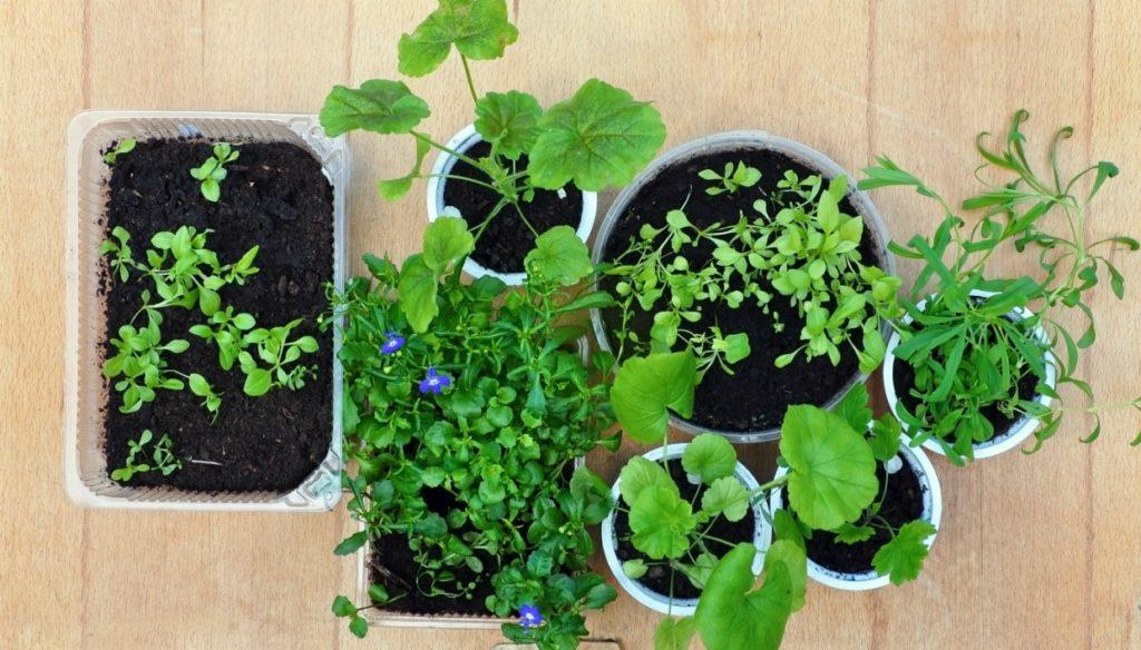 fd77621455 Αυτά Είναι τα Φυτά που δεν Θέλουν Καθόλου Πότισμα!spirossoulis.com ...