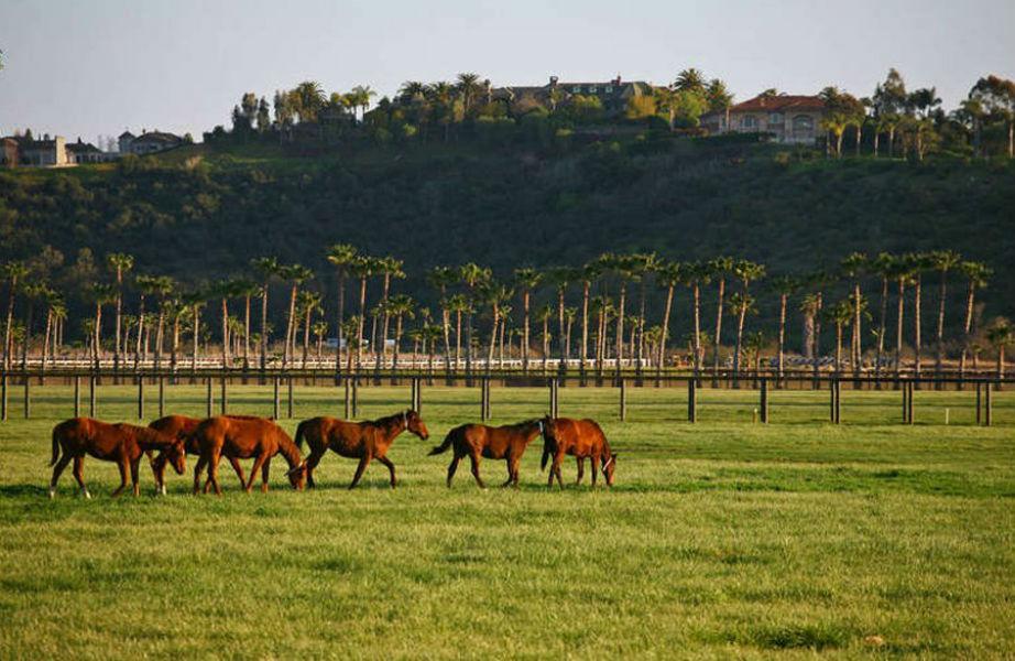 Από ένα σωστό ράντσο δε θα μπορούσαν να λείπουν τα άλογα!