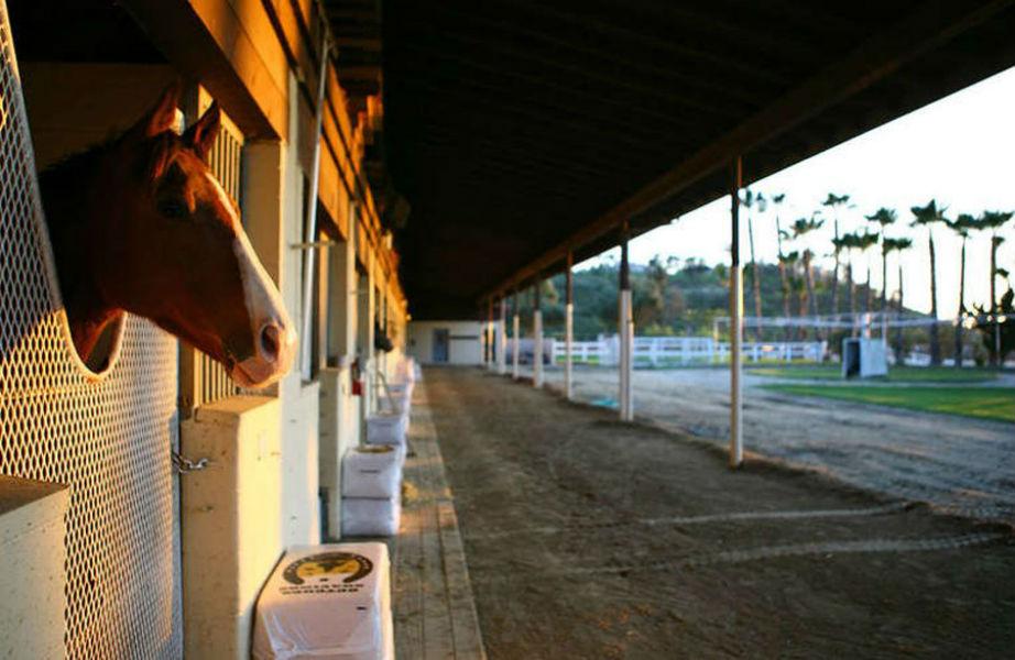 Το ράντσο διαθέτει 5 στάβλους καθένας από τους οποίους μπορεί να φιλοξενήσει έως 30 άλογα.