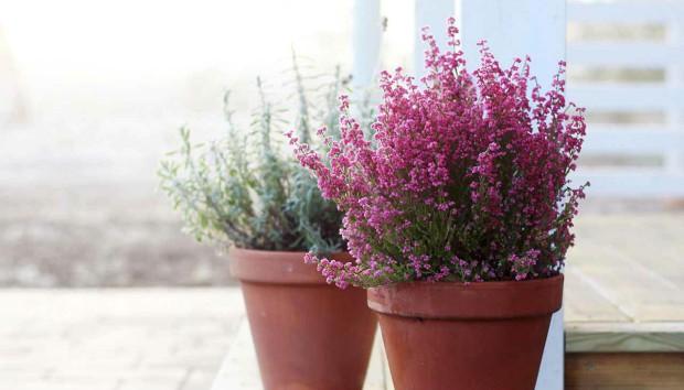 Έτσι θα Προστατέψετε τα Λουλούδια σας Από το Κρύο!
