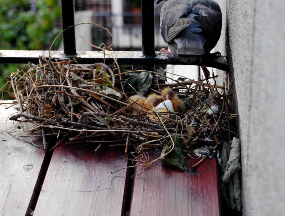 Μην αφήνετε τρόφιμα, ψίχουλα και πηγές νερού στο μπαλκόνι σας.