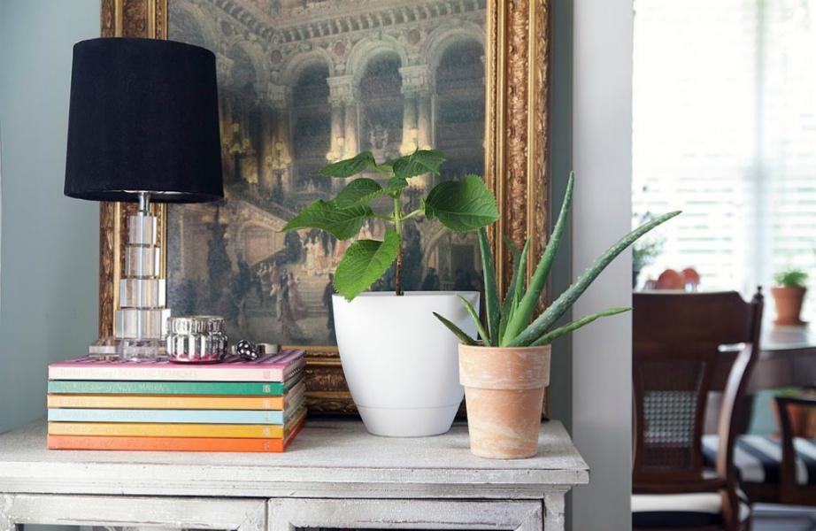 Τα φυτά και τα βιβλία δημιουργούν ένα ζεστό περιβάλλον.