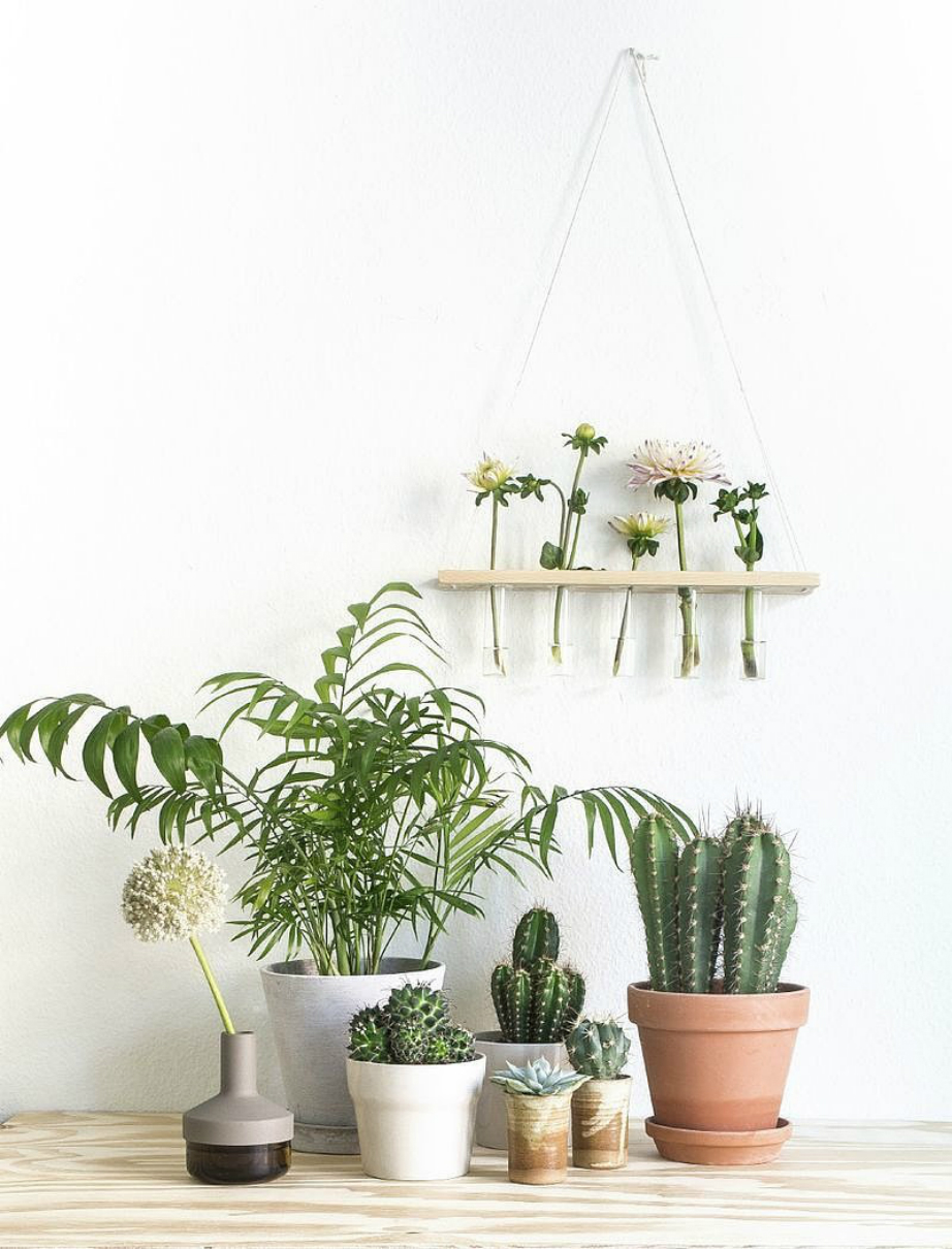 Τα φυτά δίνουν ζωντάνια και χρώμα σε κάθε χώρο.