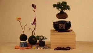 thehomeissue_bonsai