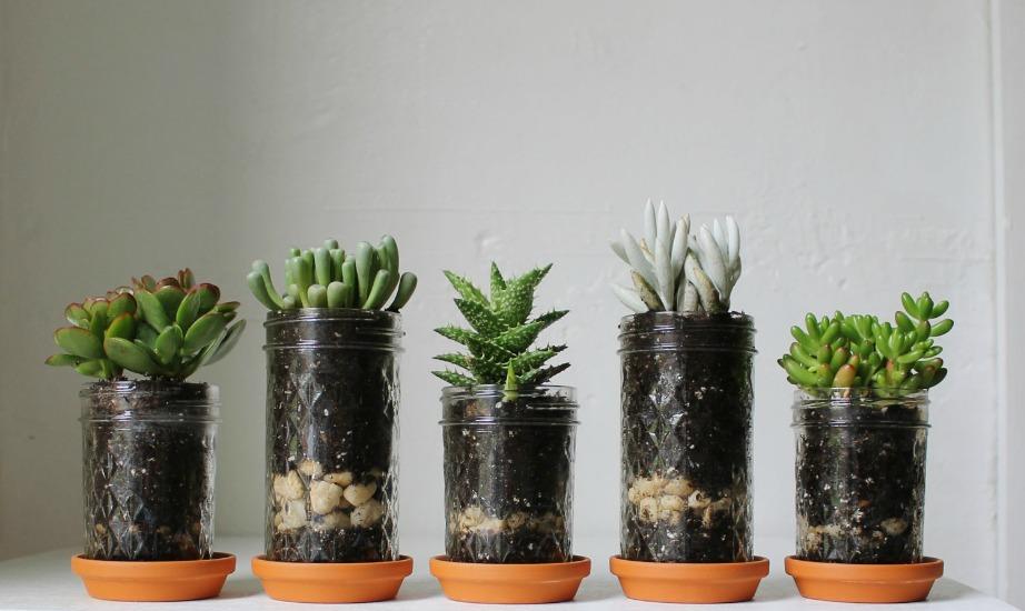 Για να δείτε αν τα φυτά σας ρειάζονται νερό, βάλτε το δάχτυλό σας μέσα στο χώμα. Αν είναι υγρό μέχρι κάποιο βάθος τότε δεν χρειάζεται να τα ποτίσετε πολύ.