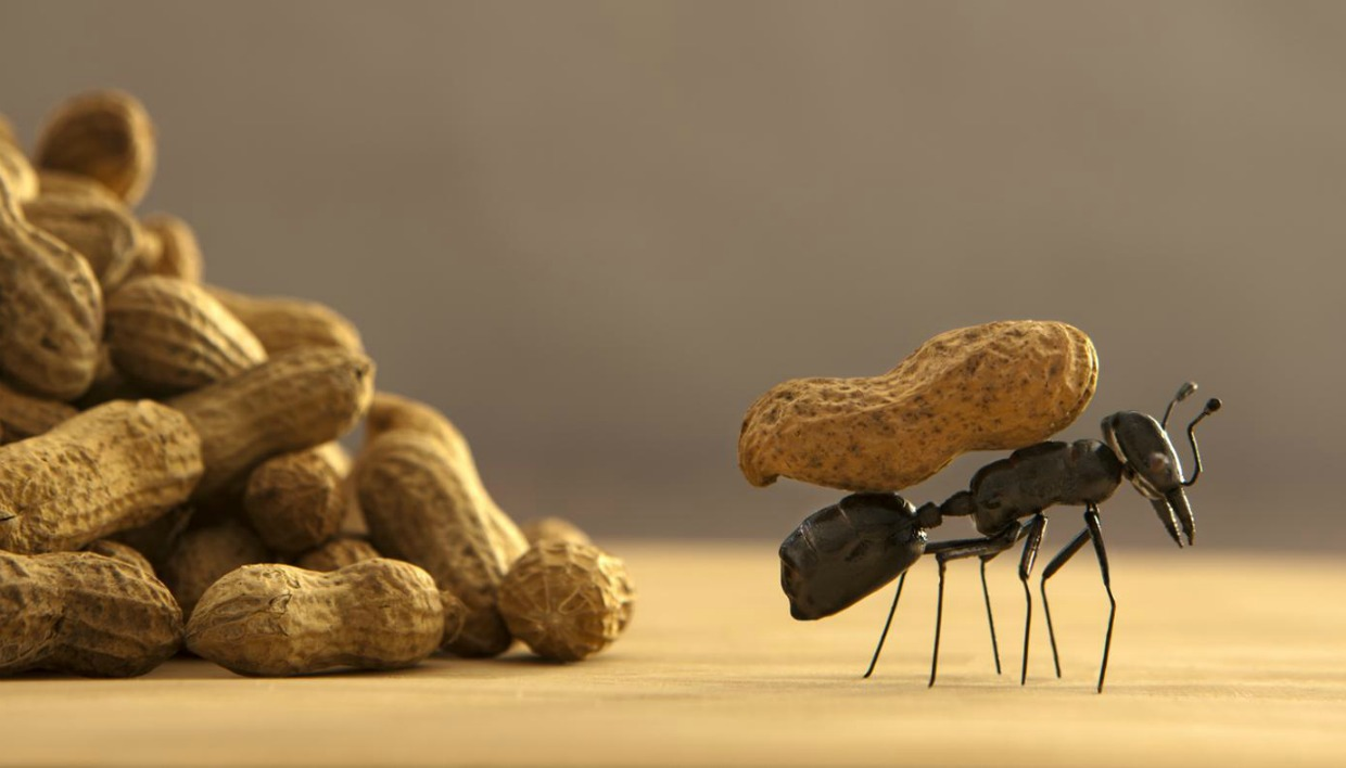 thehomeissue_ants