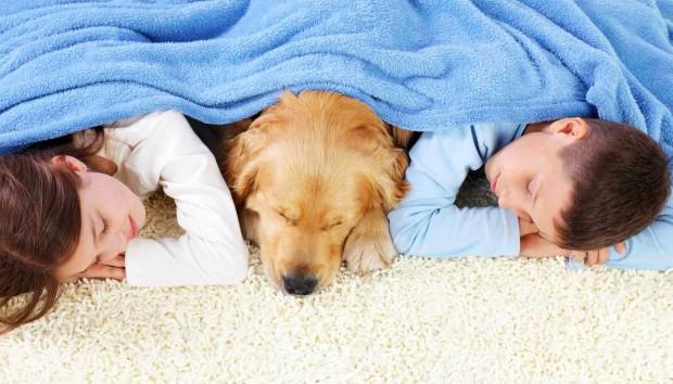 Τα 10 Κορυφαία Tips για τη Φροντίδα των Χαλιών