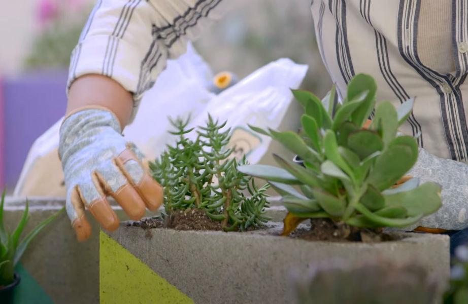 Τοποθετήστε τα φυτά σας στο τσιμεντόλιθο.