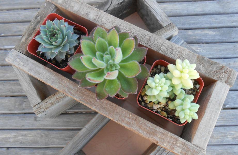 Αυτά τα φυτά είναι ψεύτικα- και θα το καταλάβει ποτέ κανείς.