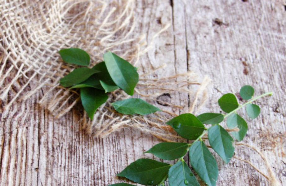 Τα φύλλα κάρυ κάνουν τα μαλλιά σας πιο δυνατά!