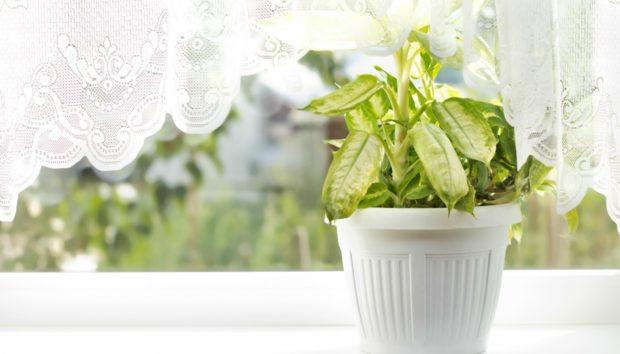 6 Διαφορετικές Ιδέες για να Διακοσμήσετε με τα Φυτά σας το Σπίτι