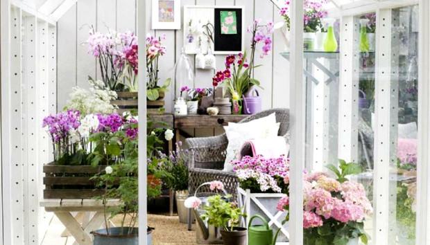 Δημιουργήστε τον Τέλειο Υποαλλεργικό Κήπο με Αυτά Τα Λουλούδια!