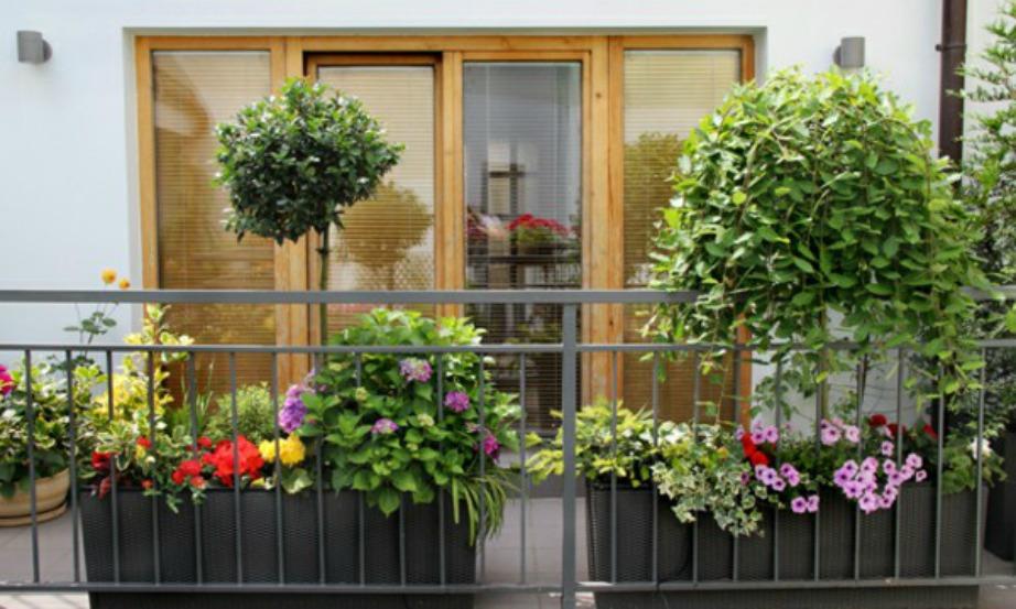 Βάλτε όσο το δυνατόν πιο ψηλά φυτά στο μπαλκόνι σας.