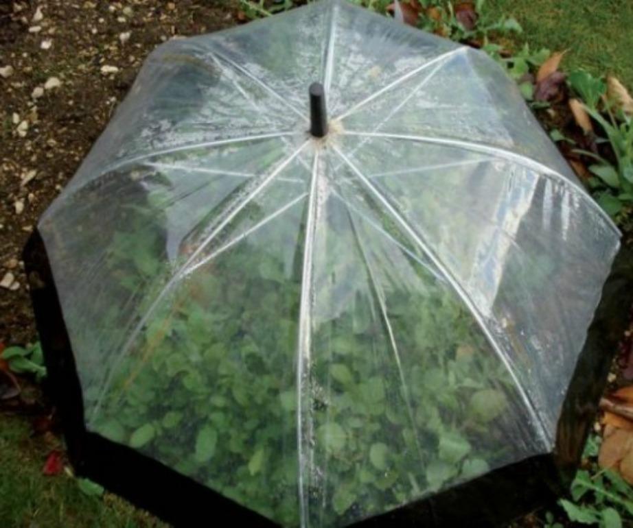 Είτε έχετε κήπο είτε έχετε βεράντα με φυτά που δεν αντέχουν το πολύ φως του ήλιου, αυτό το tip θα σας σώσει!