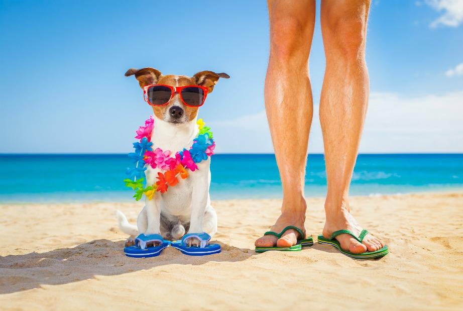 Μην ξεχνάτε να προστατεύετε και τα κατοικίδιά σας στην παραλία.