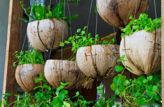 7 Ιδέες για να «Μετατρέψετε» το Μπαλκόνι σας σε...Κήπο