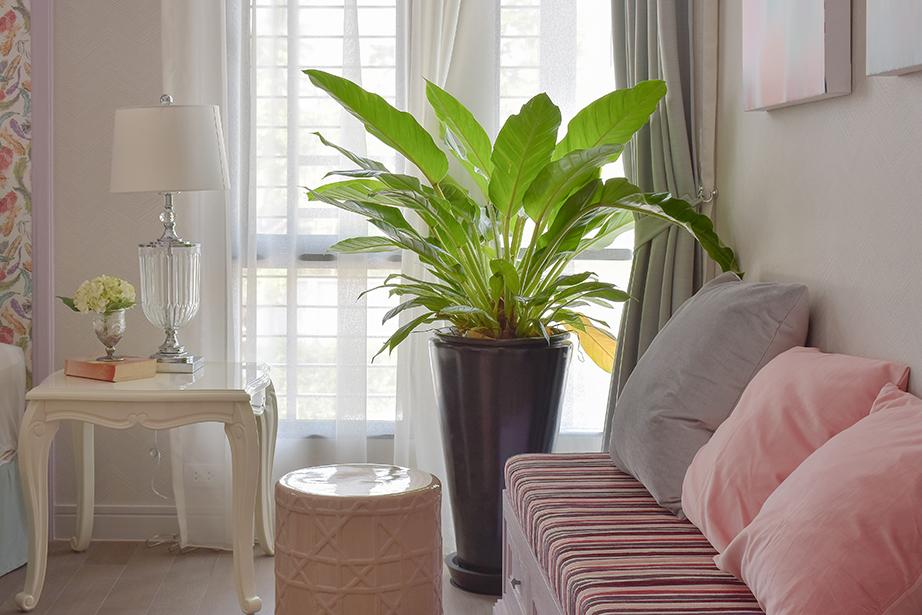 Τα φυτά εσωτερικών χώρων μπορούν να εναρμονιστούν διακοσμητικά με το χώρο που βρίσκονται και να προσθέσουν μπόνους στο σύνολο της διακόσμησής σας.