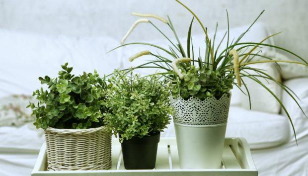 Τα Διασημότερα Φυτά για Μέσα στο Σπίτι Είναι Αυτά!
