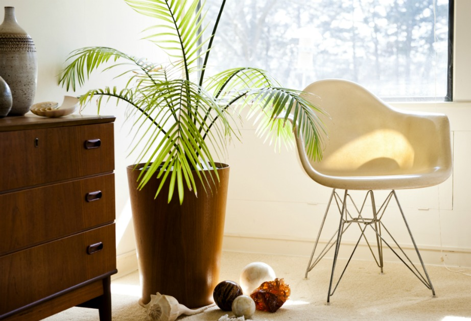 thehomeissue_plants
