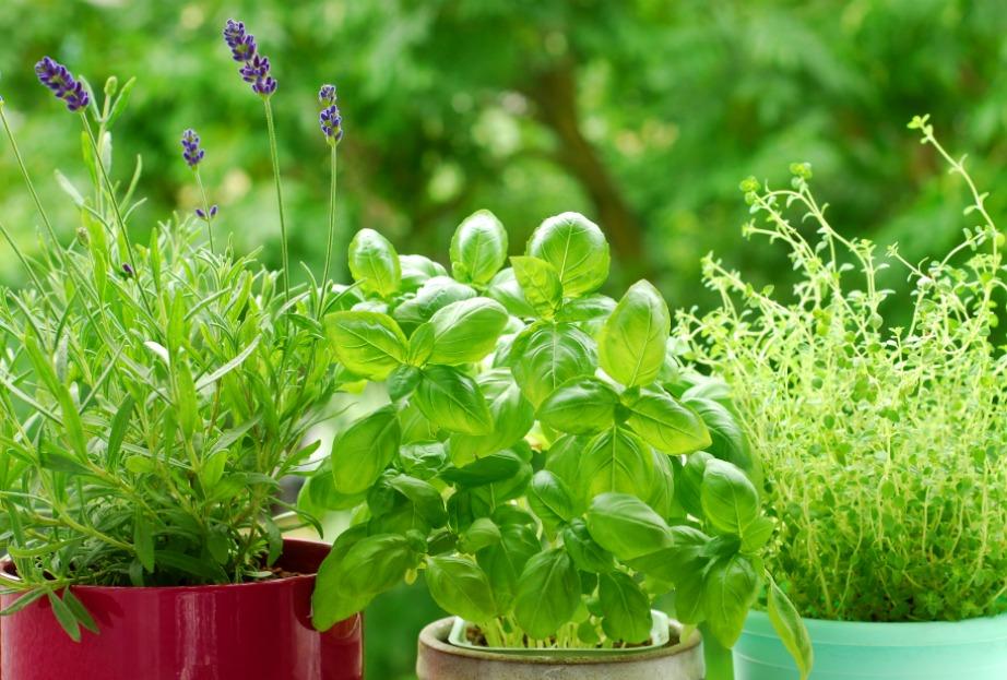 Αν βάλετε κάποιο από αυτά τα φυτά στη βεράντα σας δεν θα χρειαστεί να χρησιμοποιείτε τακτικά τοξικά εντομοαπωθητικά που μπορεί να βλάψουν την υγεία σας.