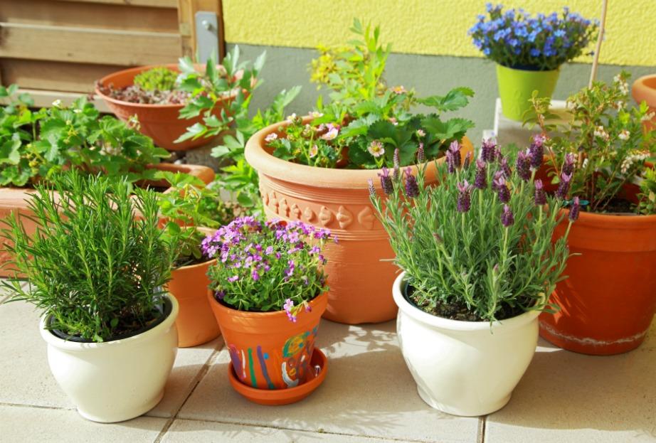 Κάποια από αυτά τα φυτά θα προσθέσουν όμορφα χρώματα στη βεράντα σας.
