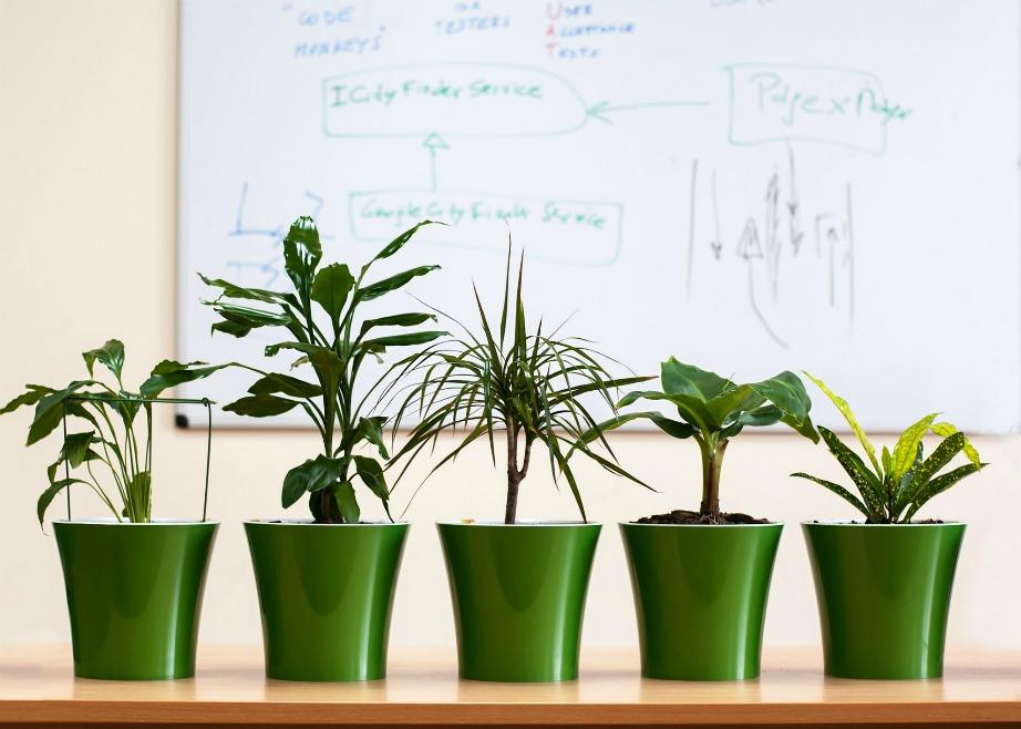 Τοποθετήστε φρέσκα λουλούδια ή γλάστρες με πράσινα φυτά.