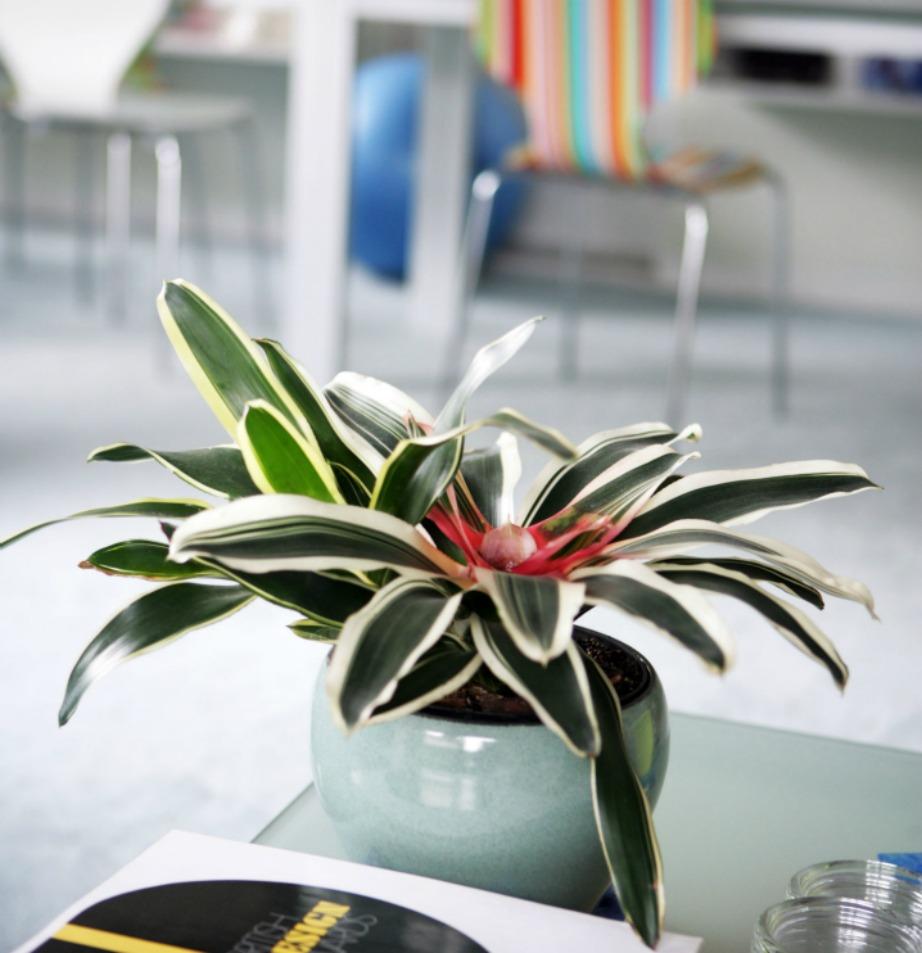 Αυτό το φυτό δεν είναι απλά όμορφο!