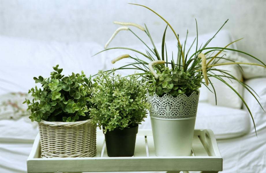 Τα φυτά αποτελούν τον πιο οικονομικό και ΄ξευπνο τρόπο για να απομακρύνετε κάθε δυσάρεστη και βλαβερή μυρωδιά από τον χώρο σας.