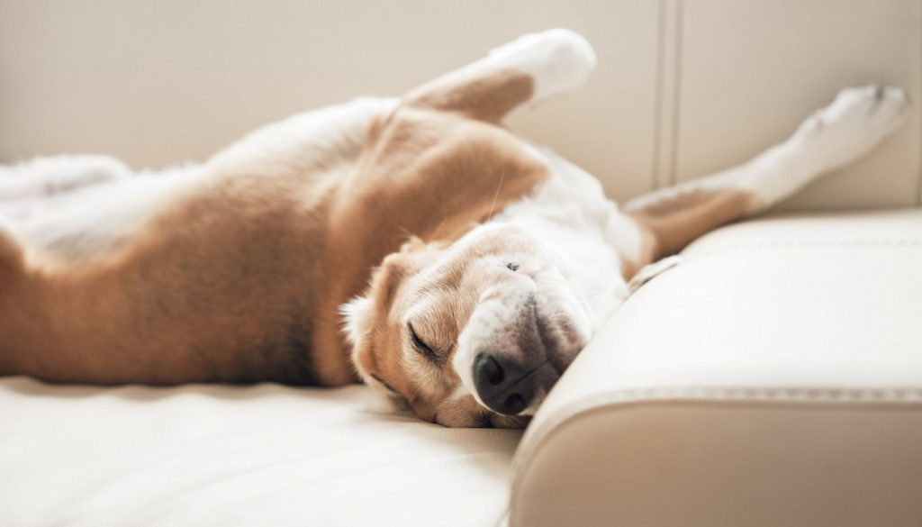 d9b5685f772c 7 Σκυλιά για… Διαμέρισμα!spirossoulis.com – the home issue