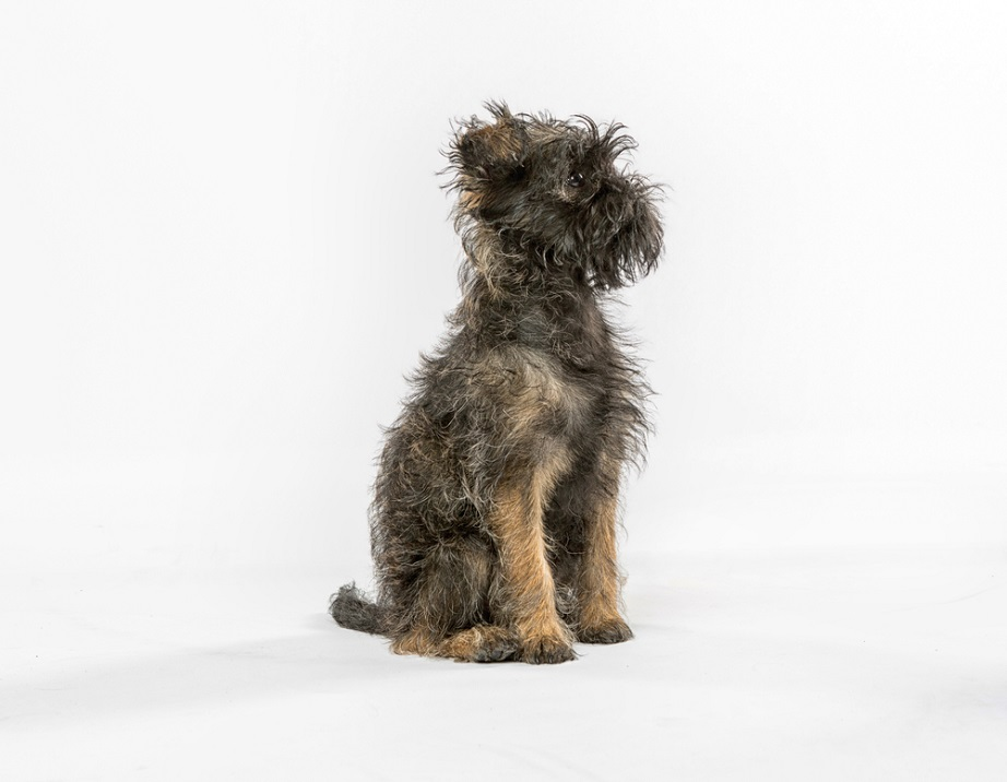 thehomeissue_dog2