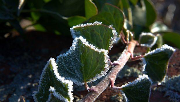Προστατεύστε τα Φυτά σας τον Χειμώνα Χωρίς να τα Βάλετε Μέσα στο Σπίτι