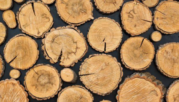 DIY: Μεταμορφώστε τους Τοίχους σας με Κορμούς Δέντρων!