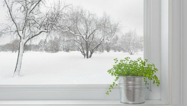 Προστατέψτε τα Λουλούδια σας Από το Κρύο σε 4 Βήματα