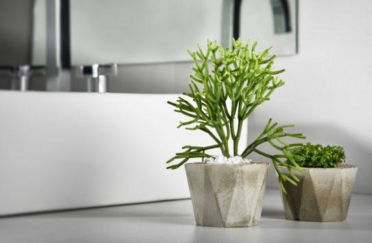 3 Καλοί Λόγοι για να Διακοσμήσετε με Φυτά το Μπάνιο σας