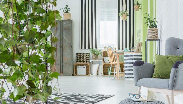 Αυτό Είναι το Ιδανικότερο Φυτό για να Διακοσμήσετε το Εσωτερικό του Σπιτιού σας