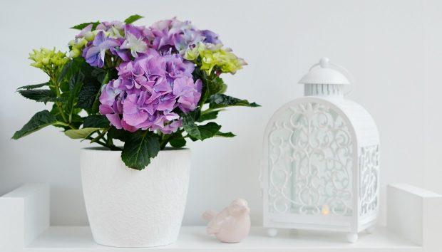 10 Καταπληκτικές και Φρέσκες Ιδέες για να Διακοσμήσετε με Λουλούδια την Είσοδο και το Μπαλκόνι σας