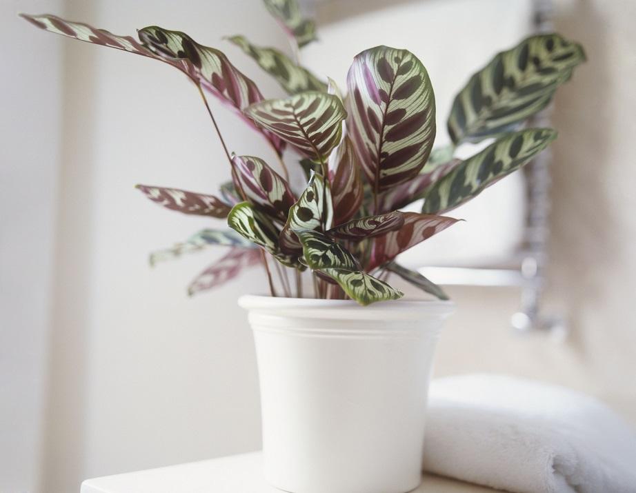 cc448ffc95ee 3 Chic Φυτά που θα Βρείτε σε Όλα τα Μοντέρνα Σπίτια!spirossoulis.com ...