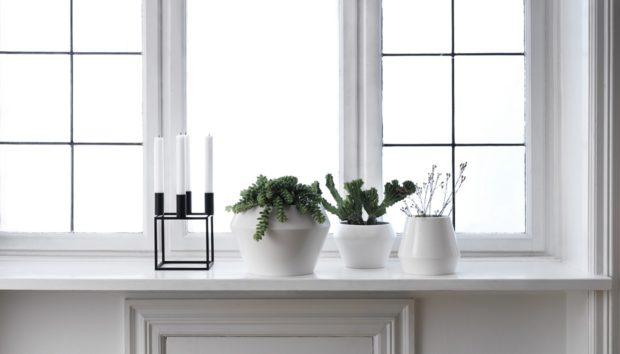 Αυτά τα 3 Chic Φυτά θα τα Συναντάτε σε Όλα τα Μοντέρνα Σπίτια!