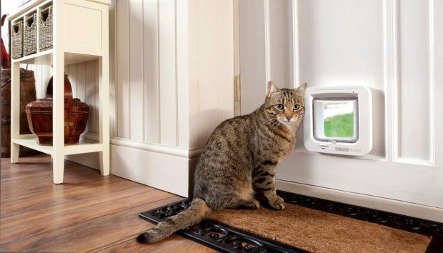 Έτσι θα Εγκαταστήσετε Ένα Πορτάκι για τη Γάτα σας