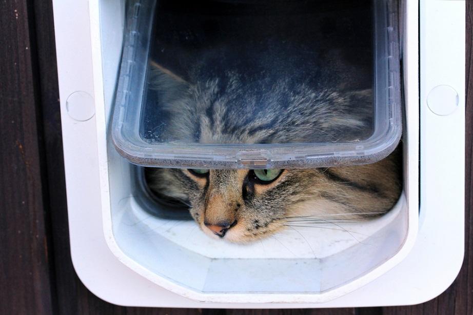 ac26cce6c1f4 Επιτρέψτε στη γάτα σας να μπαίνει στο σπίτι και να βγαίνει στο μπαλκόνι  όποτε θέλει.