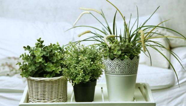 Διακοσμήστε το Σπίτι με Φυτά με Αυτές τις 6 Πολύ Όμορφες Ιδέες!